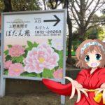 めっとこと東京上野の牡丹苑