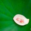 Ropps_photos_19